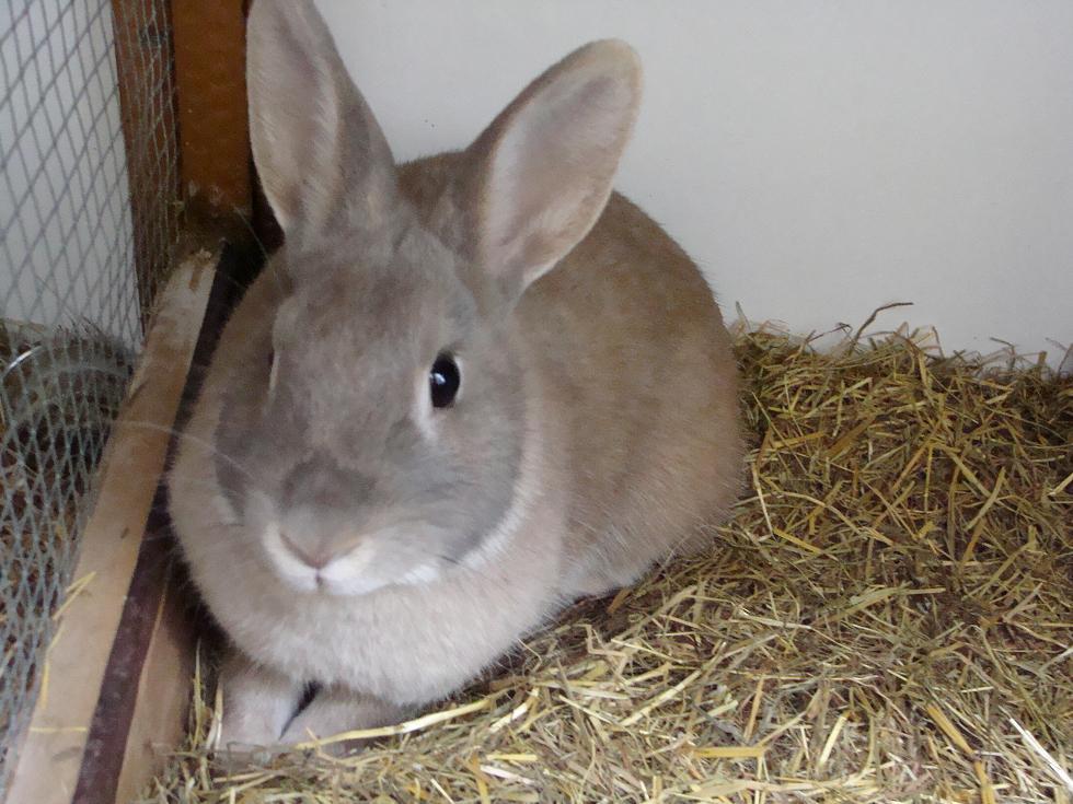 اروع صورة لأرنب داخل القفص