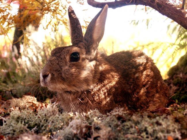 Sauvetage faune sauvage 3