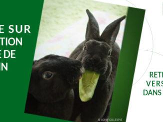 Sondage sur l'alimentation du lapin